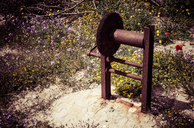 An old, rusty winch surrounded by colourful flowers