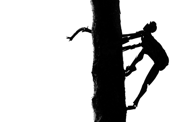 Silhouette of a sculpted man climbing a real tree